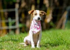 Prefeitura de Itapevi realiza feira de adoção de pets na Praça 18 de fevereiro